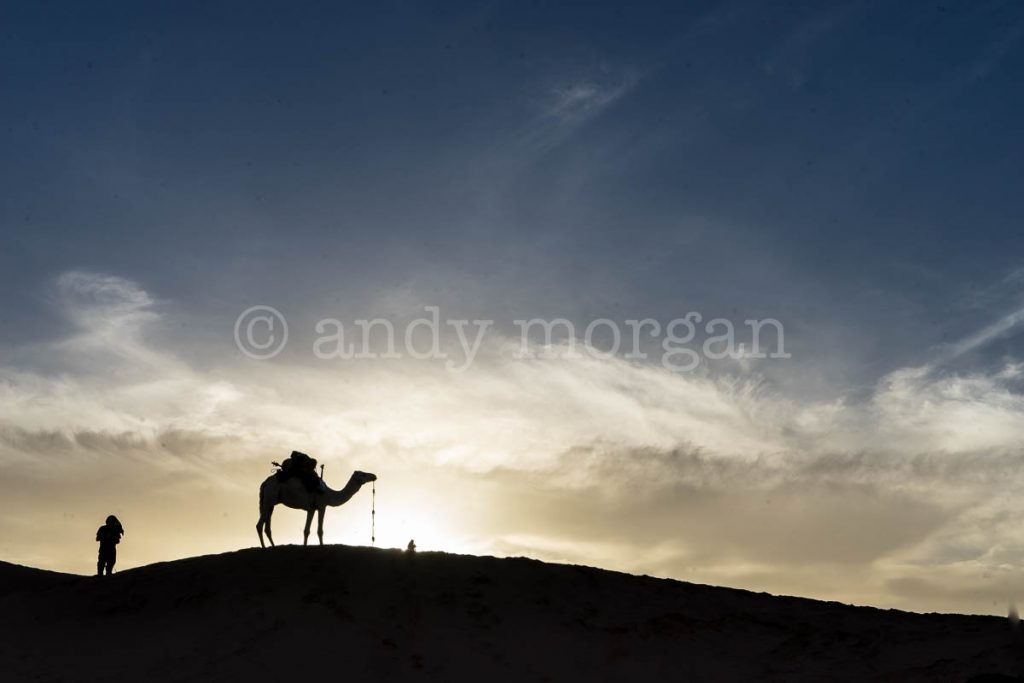 Sunset at Taragalte Festival with Camel on horizon